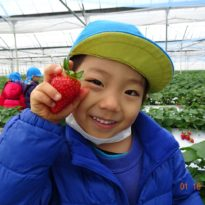 🍓Strawberry Picking🍓【Jan. 16】